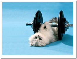 kitten-lifting-weights